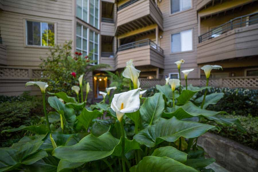 Flowers on the manicured grounds of Alpine Park Walnut Creek apartments.